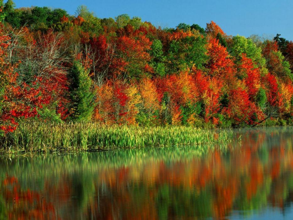 autumn trees paints leaves multi-colored horseshoe lake new york lake wallpaper