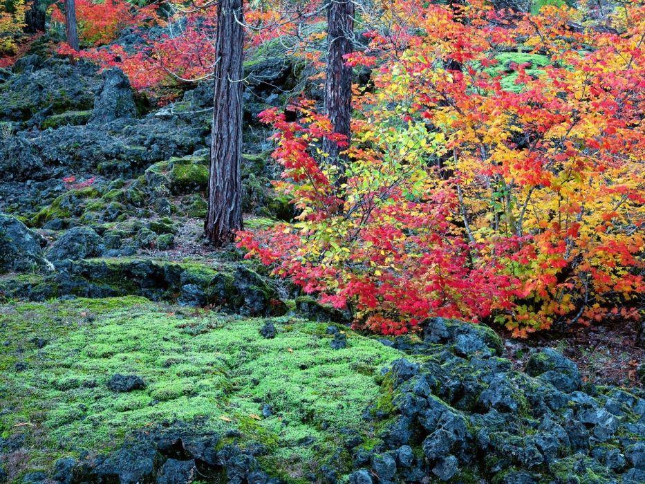 autumn trees leaves moss stones wallpaper