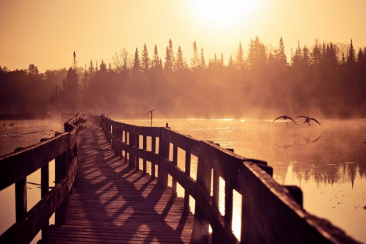 bridge fog seagulls morning wallpaper