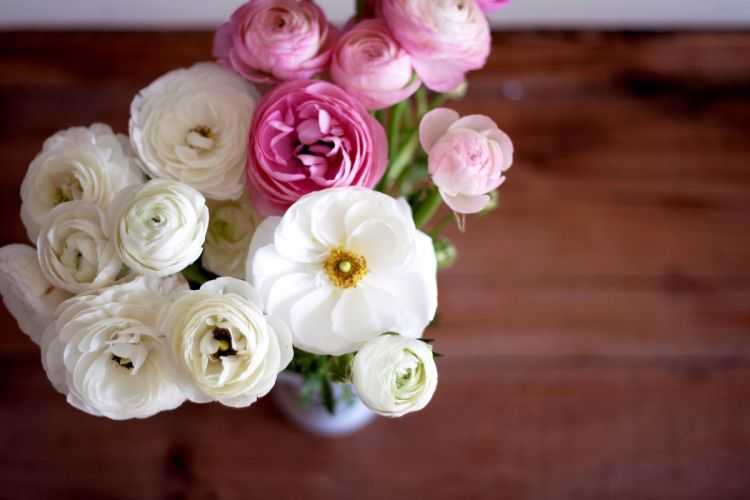 buttercup ranunculus bouquet flowers white pink buds petals vase wallpaper