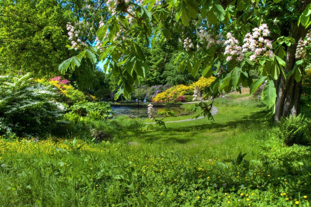 chestnut spring flowering garden green clearly wallpaper