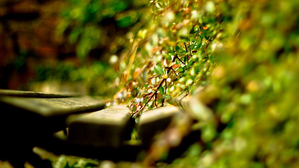 close-up grass timber green wallpaper