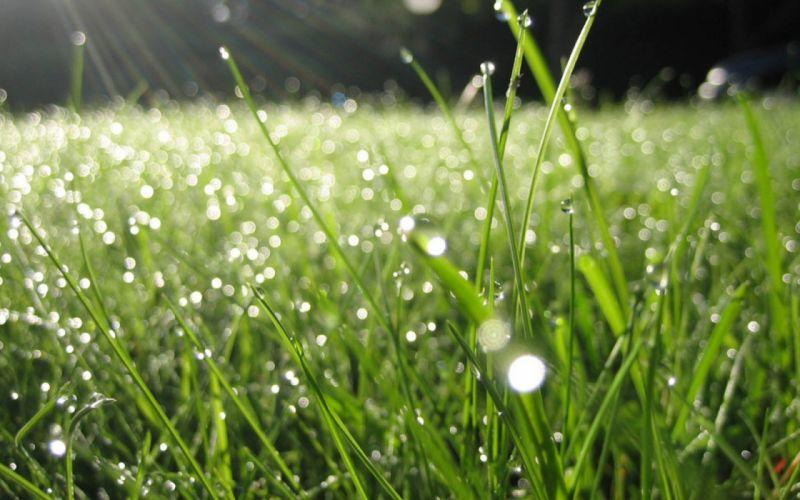 dew grass drops green summer morning wallpaper