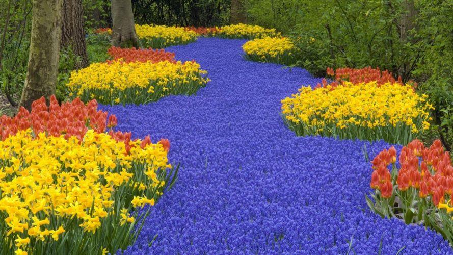 daffodils tulips muscari spring road trees park wallpaper
