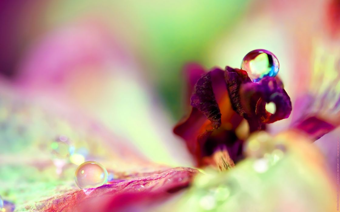 flower drop dew petals reflection glare wallpaper