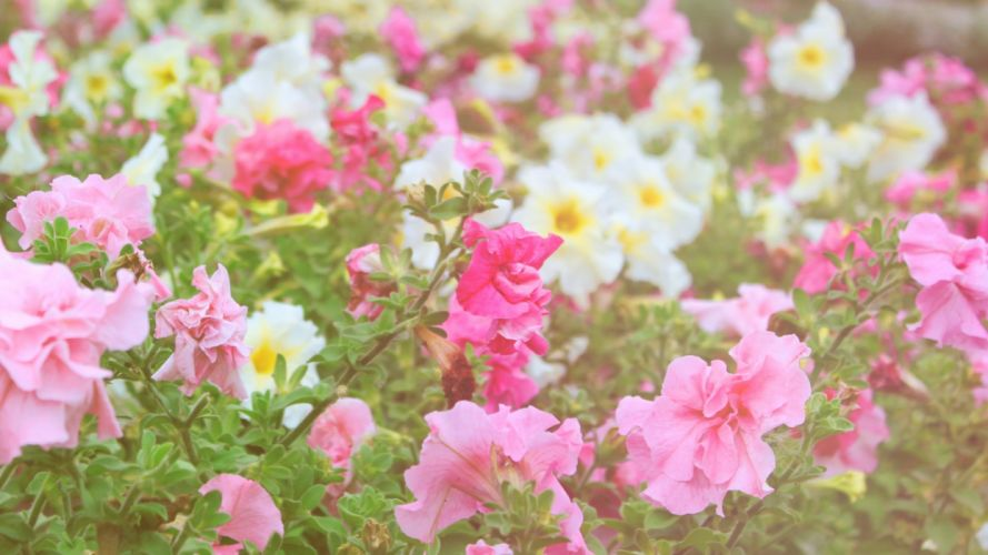 flowers different field nature greenery wallpaper
