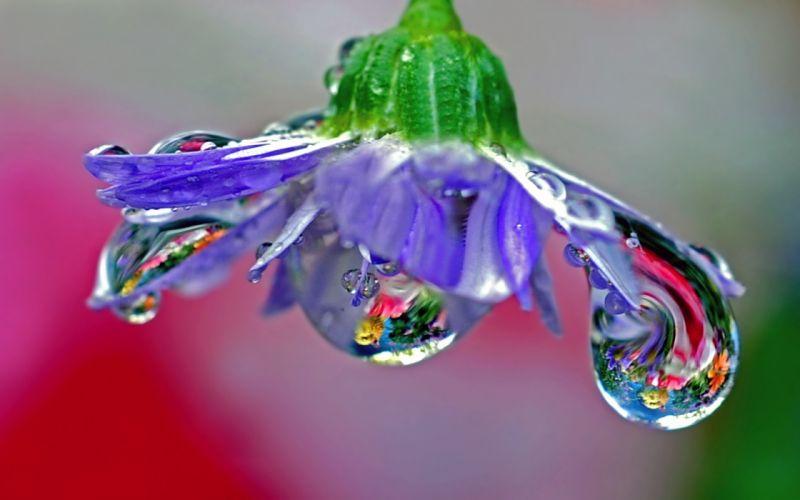flower drops dew reflection stem wallpaper