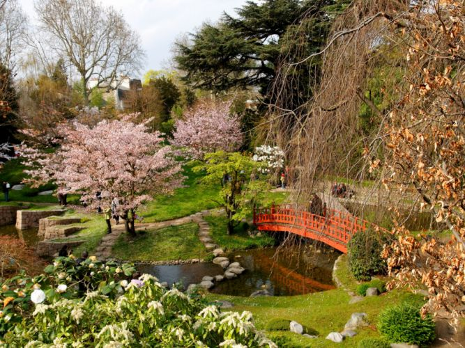 flowering trees bridge stones registration from above cloudy wallpaper