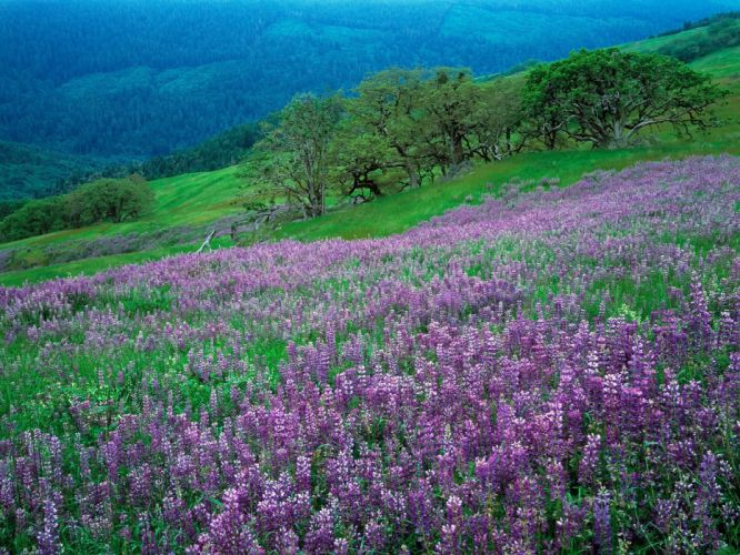 flowers mountains slope grass green lilac wallpaper