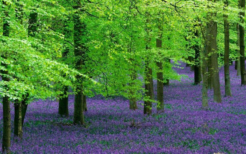 flowers trees wood field green lilac wallpaper