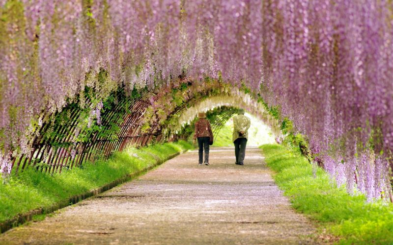 garden spring people walk flowering wallpaper