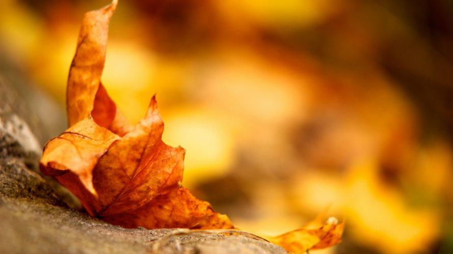 leaves fall dry fallen wallpaper