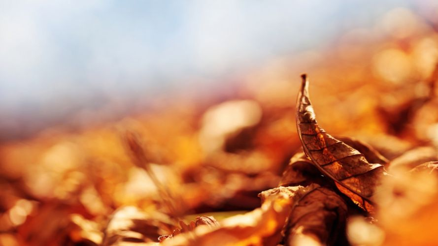 leaves fall fallen curved dry wallpaper