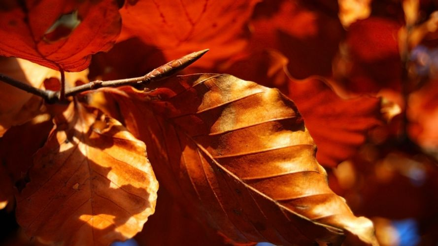 leaves fall dry form fallen rolled wallpaper