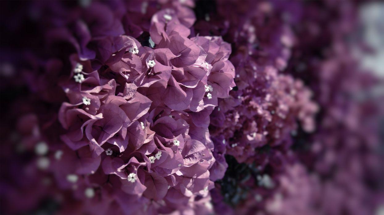 grass plants flowers lilac wallpaper