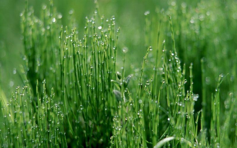 grass green light moist drops dew wallpaper