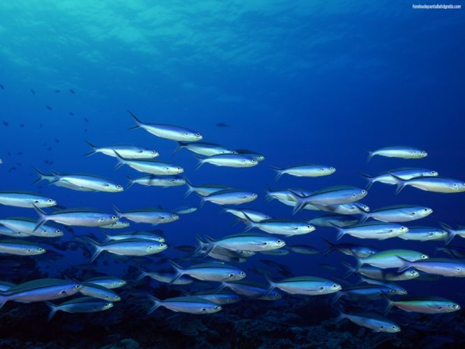 peces mar banco wallpaper