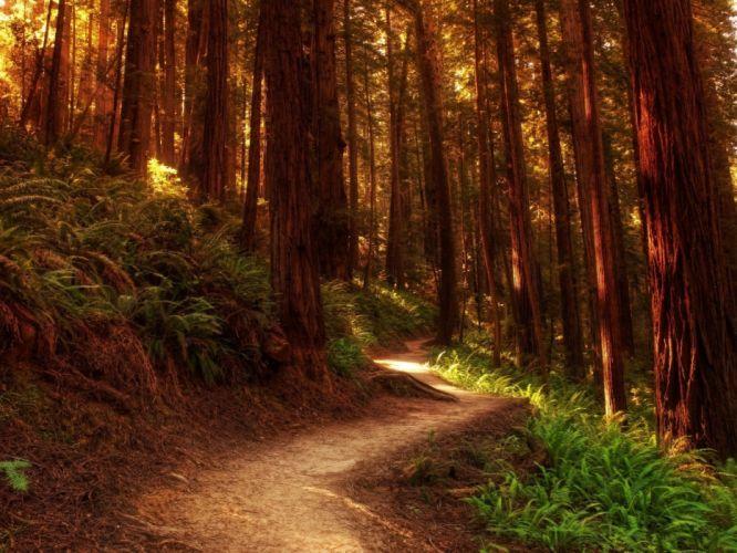 wood trees track trunks ferns paints colors wallpaper
