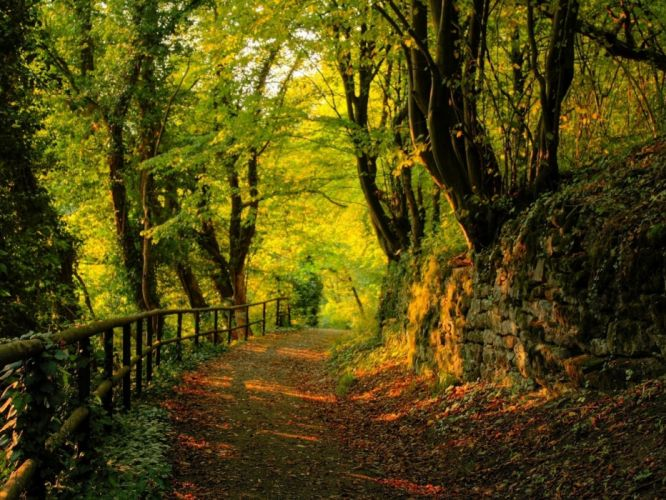 wood track stones trees autumn leaves wallpaper
