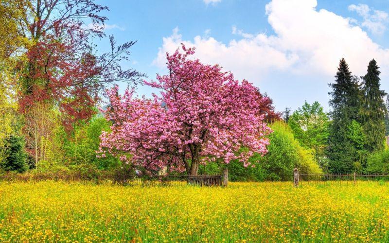 spring tree bush flower field fence wallpaper