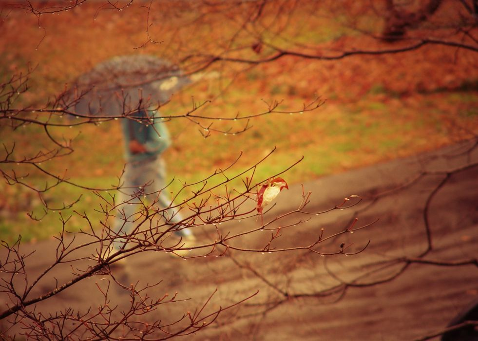 park people umbrella rain trees branches autumn wallpaper