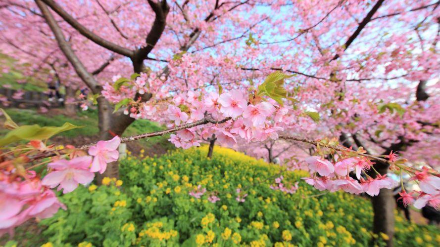 spring bloom tree flowers wallpaper