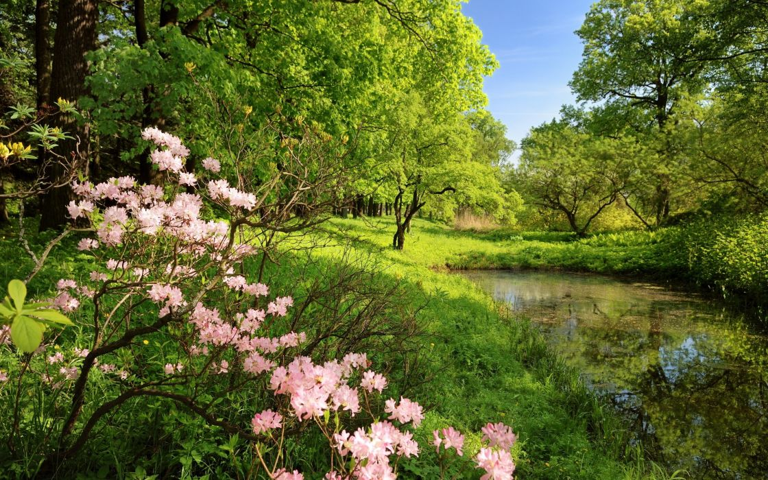 spring branches colors wood trees pond water green shadows clearly wallpaper
