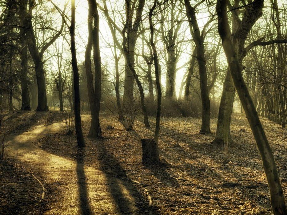 trees wood trunks autumn track paints colors secret wallpaper