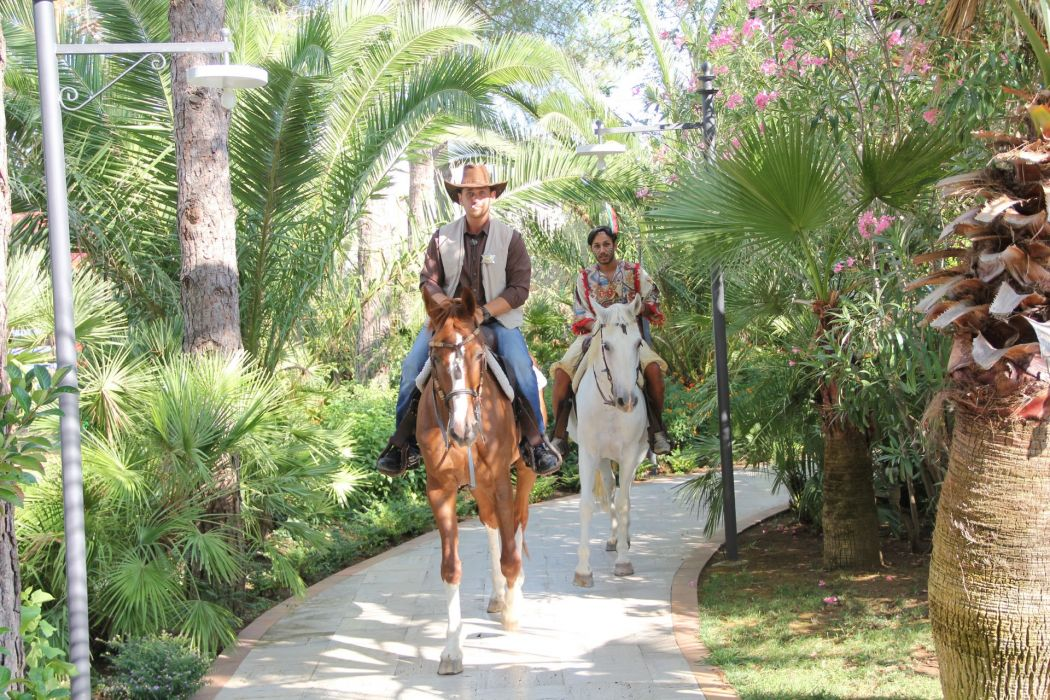 paseo caballo entretenimiento wallpaper