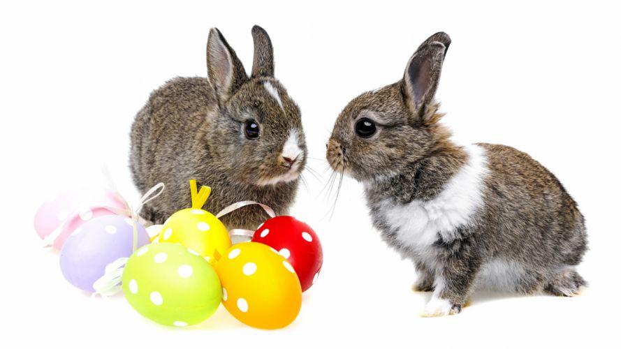 conejos huevos pascuas wallpaper