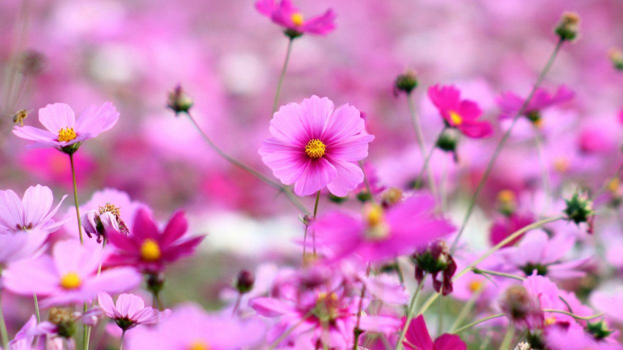 naturaleza flores rosas wallpaper