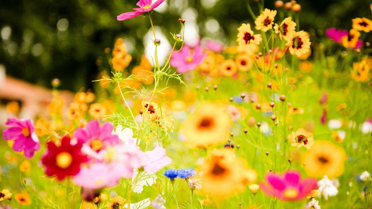 naturaleza flores campo silvestres wallpaper