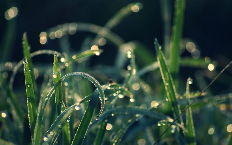 grass dew moisture drops wallpaper