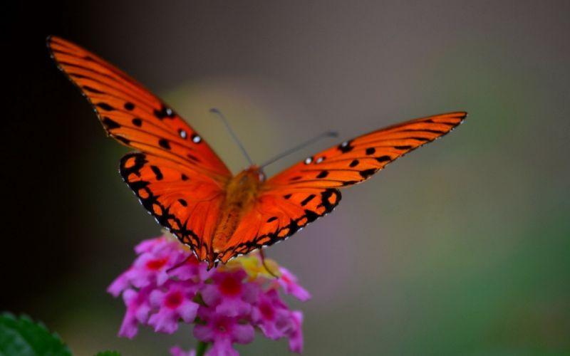 macro butterfly flower wallpaper