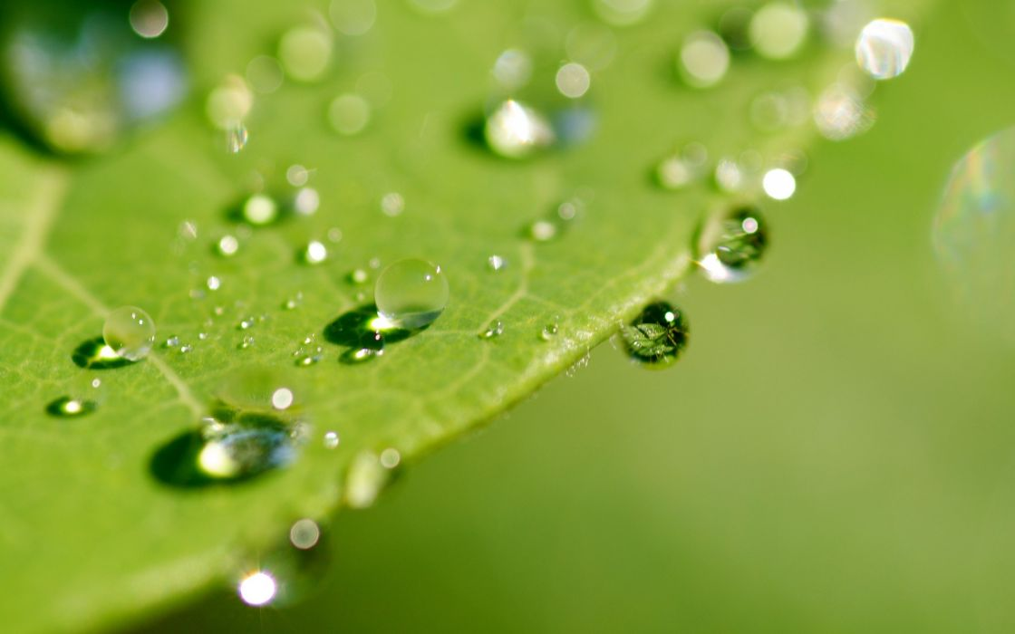 leaves drops dew surface wallpaper