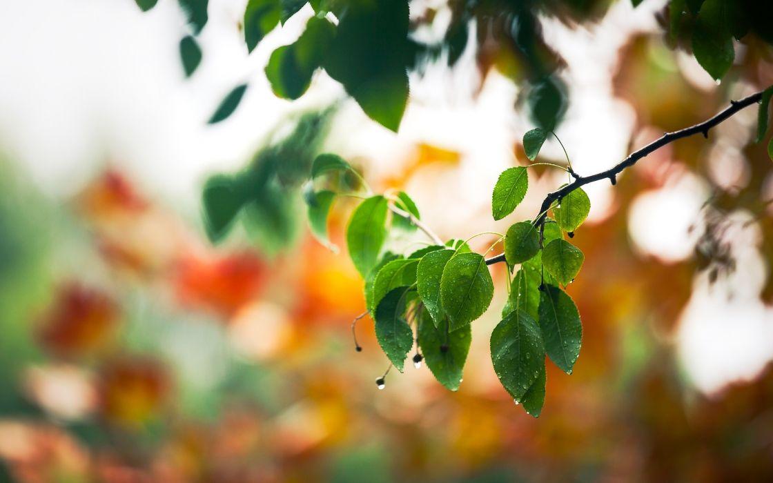macro drops spring leaves branch wallpaper