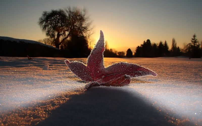 macro leaf light frost sky snow evening wallpaper