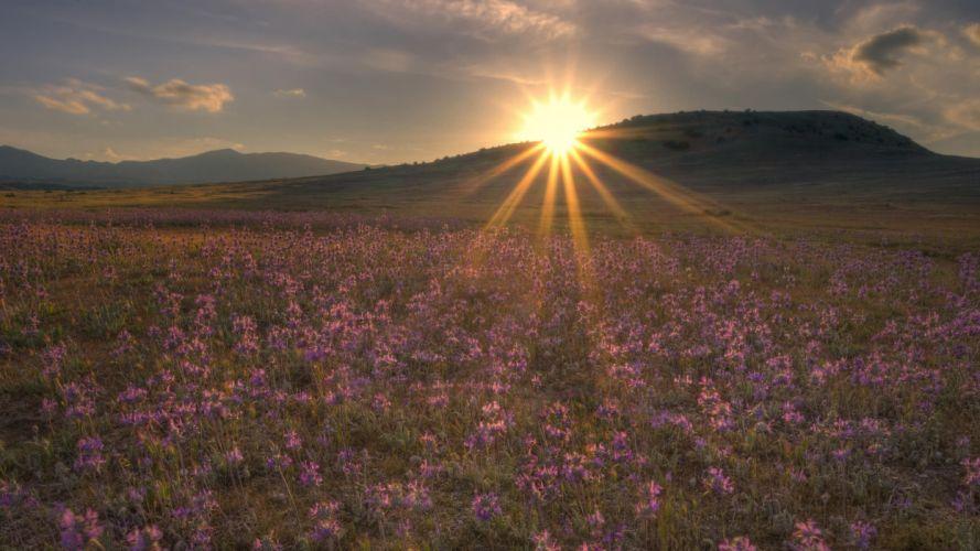 sun evening decline light beams flowers field wallpaper