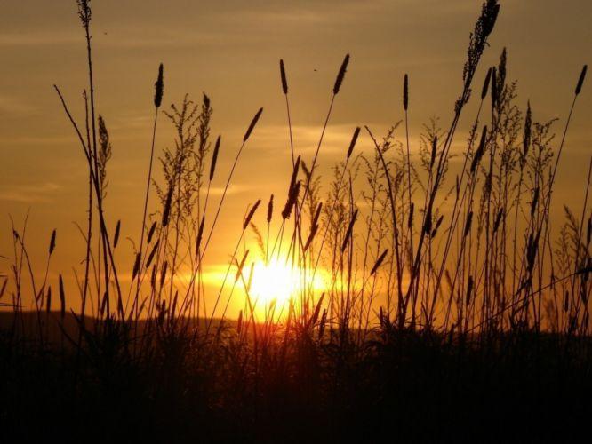 sun light beams stain ears field evening wallpaper