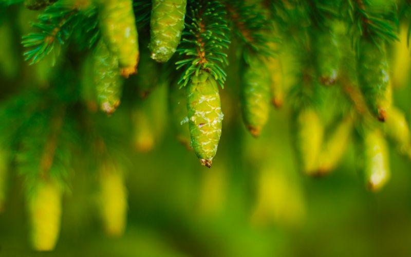 leaves plant glare green macro wallpaper