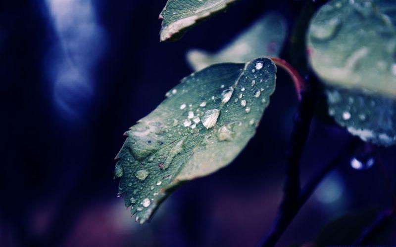 leaves plant drops glare shadows macro wallpaper