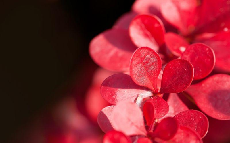 plant flower petals drops macro wallpaper