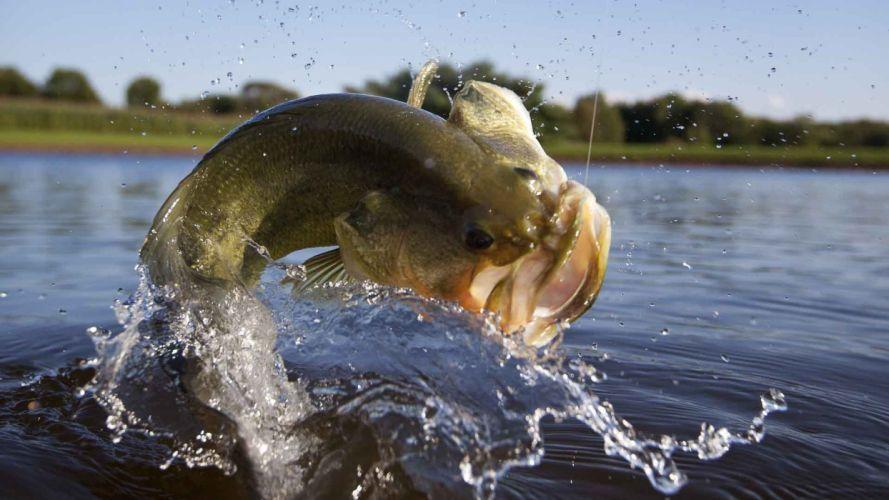 Fishing fish-hooked-leap-water wallpaper