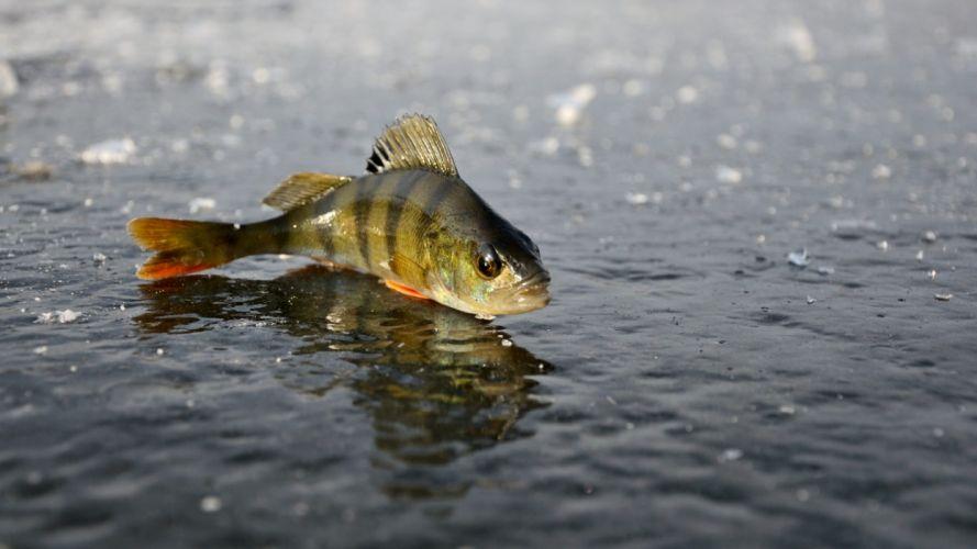 Fishing fish-over water wallpaper