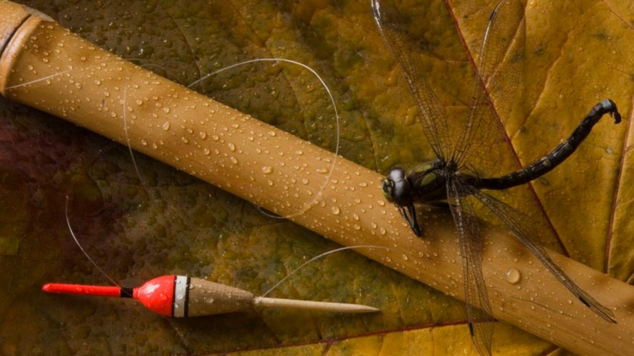 Fishing line-float-bamboo-dragonfly wallpaper