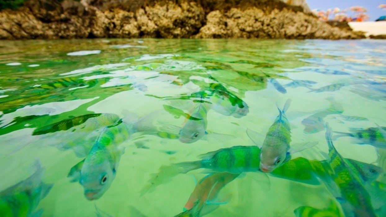Fishing fish-sea-underwater-swim wallpaper