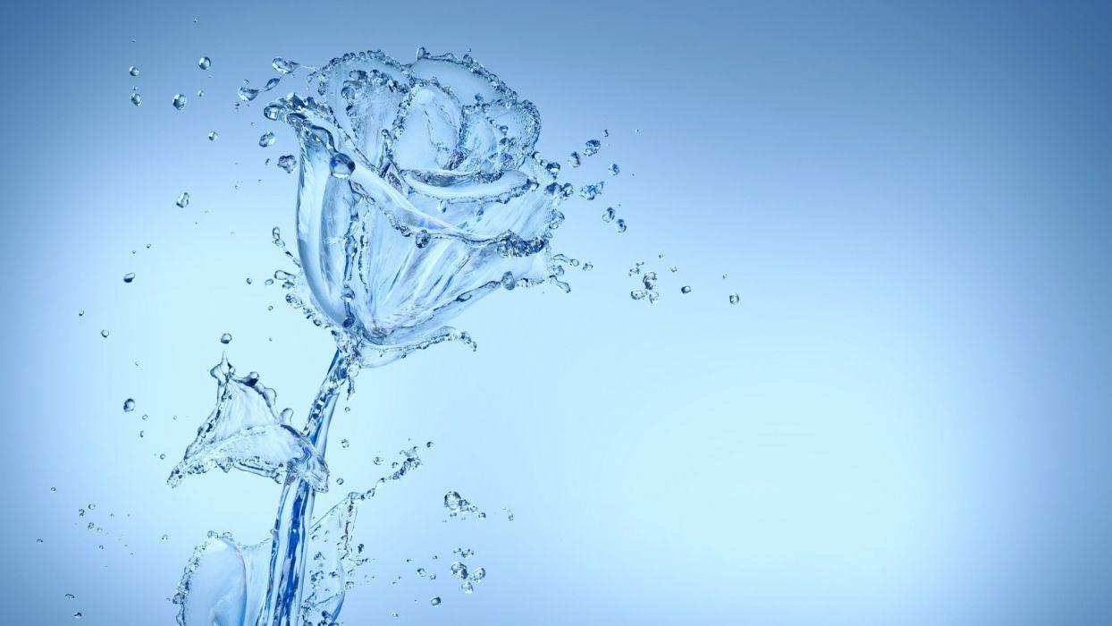 Arts water-spray-flower-bud-rose wallpaper
