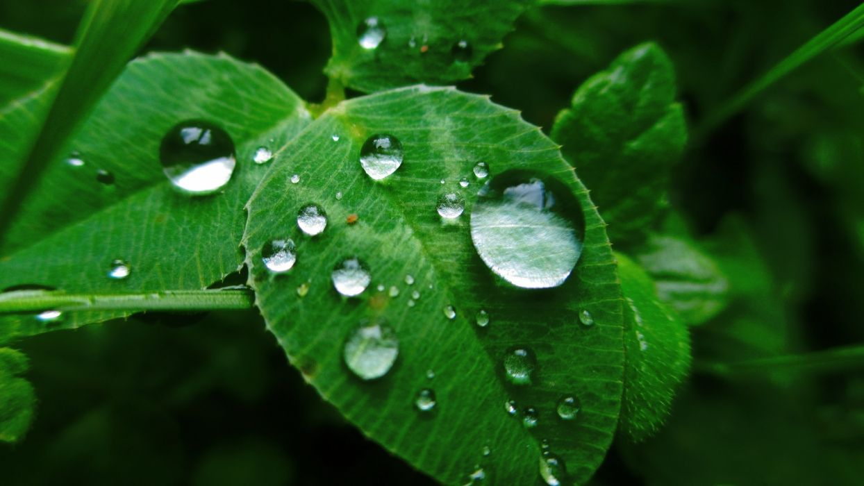 Photography leaves-grass-dew-drops-nature wallpaper