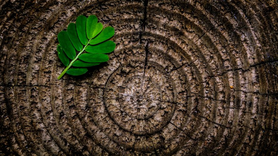 abstract brown flora green leaf nature pattern photographic composition rings rough stump texture tree tree stump trunk wood wooden wallpaper