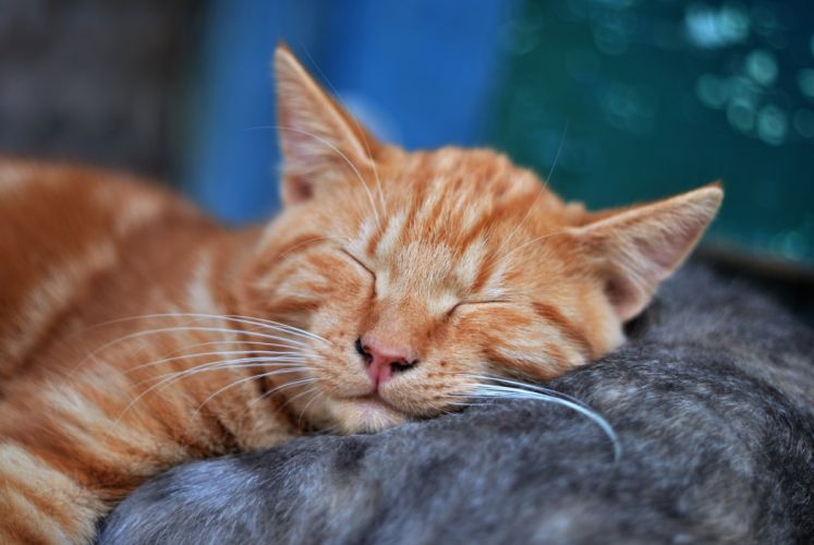 adorable animal baby blur cat close-up cute domestic dream eye feline funny fur hair kitten kitty little mammal pet portrait sleep sleeping tabby whisker young wallpaper